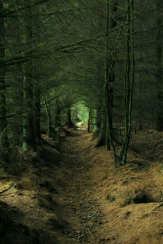 I dreamed that I traveled down a long path of trees. A lonely dark way, but in the end I hoped to see a bright place.