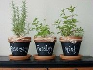 Clay Pots painted with chalkboard paint! So easy to do. My girls want to make an indoor garden. This is perfect. :) such a cute idea for your herbs pots! Herb Pots, Garden Pots, Herb Planters, Balcony Garden, Container Gardening, Gardening Tips, Organic Gardening, Indoor Gardening, Gardening Zones