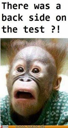 Funny Monkeys sometimes have a bad day at school? HOW MANY TIMES DOES THIS HAPPEN? At least once every test.