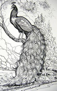 Henna Drawings, Bird Drawings, Ink Pen Drawings, Animal Drawings, Peacock Sketch, Peacock Art, Peacock Drawing Simple, Peacock Decor, Peacock Coloring Pages