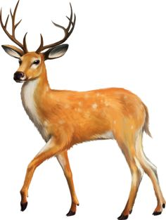 Deer applies to a tendency to be cautious, watchful, aware. Deer connotes some type of attachment to nature. Wild Animals Pictures, Animal Pictures, Animal Paintings, Animal Drawings, Art Tigre, Deer Cartoon, Cartoon Images, Farm Animal Coloring Pages, Deer Photos