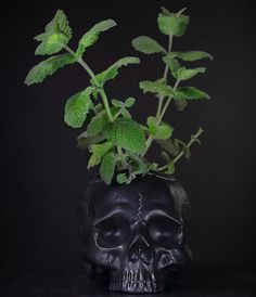 Skull Planer Self Watering Ceramic Planter by ColdMountainStudio