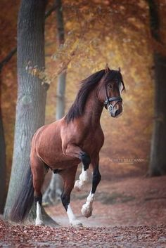 Name: Chase gender:stallion mate:no foal:no - Belezza,animales , salud animal y mas Beautiful Horse Pictures, Most Beautiful Horses, Animals Beautiful, Cute Horses, Pretty Horses, Horse Love, Cute Baby Animals, Animals And Pets, Funny Animals