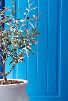 Blue door & Olive Tree, Santorini ,Greece