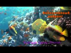 В феврале у Вас будет возможность принять участие в увлекательном подводном приключении на Красном море.  Это путешествие доставит Вам максимальное удовольствие. Дайвинг тур в Египет организовывается нашим клубом ежегодно, в 2015 году путешествие приключение запланировано на февраль. Активный отдых - дайвинг и снорклинг в Египте