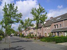Wij willen verschillende bomen in onze wijk, dezelfde bomen kan eentonig worden!