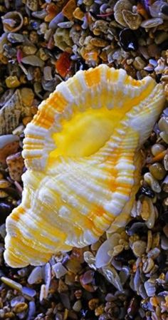 Shell, A Gift From the Sea (12)