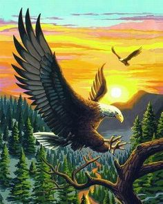 Diy oil painting, paint by number kit- the Eagles 16*20 inch, No Frame