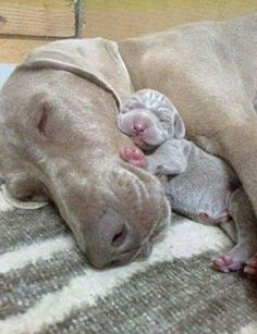 mom and her baby!