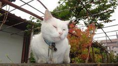 今日のゴロ - http://iyaiyahajimeru.jp/cat/archives/63216