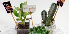Regalos corporativos: Originales y naturales arreglos de lucky bamboo, cactus y suculentas, Santiago