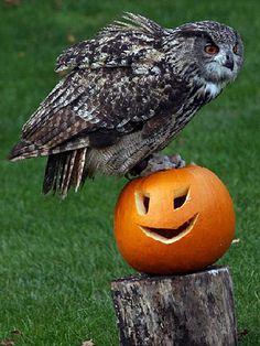 holloween animals   Animals enjoying Halloween   Animals enjoy Halloween   Photo Galleries ...