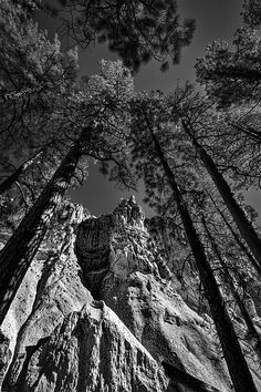 Photograph by Stuart Litoff.  #Cliffs and #cave #dwellings framed by #tall #trees at #Bandelier #NationalMonument near #SantaFe, #NewMexico