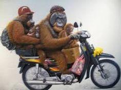 Hasil gambar untuk monyet gila