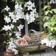 Climbing plants at croi - Wood Decora la Maison Gardening Magazines, Gardening Books, Gardening Tips, Urban Gardening, Organic Gardening, Potager Garden, Balcony Garden, Garden Plants, Magic Garden