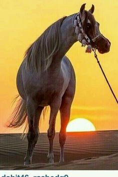 Stunning Arabian and dreamy desert sunset. So pretty!