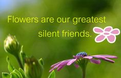 Passionate Hearts :The Real Essence Of Life - Flowers are our greatest silent friends!