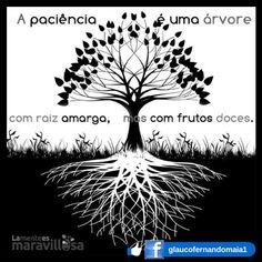 A paciência é uma árvore com raiz amarga, mas com frutos doces. #motivacao #sucesso #prosperidade