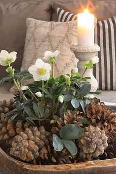 pine cones, helleborus and candle - pretty Christmas arrangement Christmas Flowers, All Things Christmas, Winter Christmas, Christmas Holidays, Christmas Crafts, Xmas, Family Holiday, Simple Christmas, Pine Cone Decorations