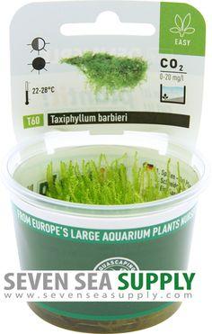 Dennerle Plant It Invitro Live Aquarium Plant Alternanthera reineckii Mini In-Vitro