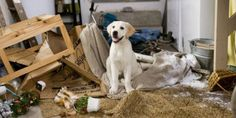 Cães que vivem em apartamento precisam de cuidados especiais para não desenvolverem estresse ou ansiedade. Confira algumas dicas! Independente da raça, cães que vivem em apartamentos tendem a sofre…