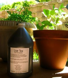 how to brew compost tea a super-nutrient plant food via Anderson Anderson Locicero Therapy Compost Tea, Garden Compost, Garden Soil, Edible Garden, Lawn And Garden, Garden Beds, Organic Gardening, Gardening Tips, Vegetable Gardening