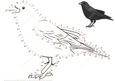 Crow dot to dot from Birds category. Select from 32012 printable crafts of cartoons, nature, animals, Bible and many more. 5th Grade Activities, Montessori Activities, Printable Crafts, Free Printables, Dots Free, Bird Theme, Free Printable Coloring Pages, Bird Prints, Colouring Pages