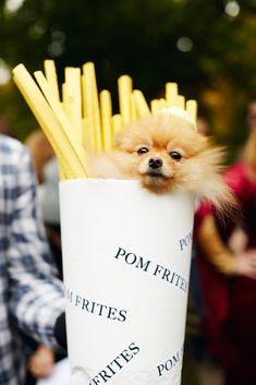 You still have time to copy one of these adorable dog Halloween costumes