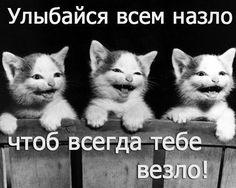 http://smeshortiki.blogspot.ru/   Бермуды - С нами не соскучишься! Весёлый Блог, приколы, анекдоты,  видео...