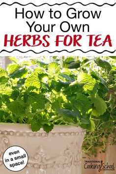 How to Grow Your Own Herbs for Tea even in a small space Herbal tea is easy and rewarding to grow yourself Many tea herbs are easytogrow and do well in pots and small sp. Garden Types, Home Greenhouse, Greenhouse Wedding, Greenhouse Ideas, Small Greenhouse, Types Of Herbs, Home Vegetable Garden, Vegetable Ideas, Peppermint Tea
