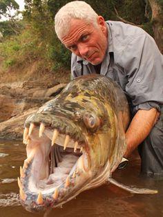 Tiger fish, nope!