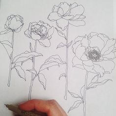 Micron pens and negronis for the win on a special project. #monvoir #illustration #peony