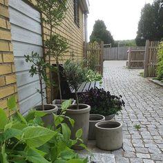 Instagram media by krusenstjarna - Ommöblering av krukor pågår... / Potgardening #potgarden #krukor #krukodling #helasverigeodlar #blomsterlandet #instagarden #tradgardsinspo #penseer #pansies #olivträd #fikonträd #vattenblänk #gatsten #staket #uppstammadliguster #trädgårdsrum #trädgårdsentré #garden #sittplatsiträdgården #trädgård #garten #trädgårdsdesign #havedesign #jardin #hagedesign #gardendesign #hage #have #trädgårdsinspiration #haveinspiration