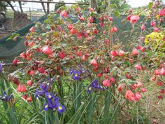 .my wonderful garden<3