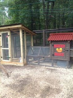 The Breakfast Club - BackYard Chickens Community