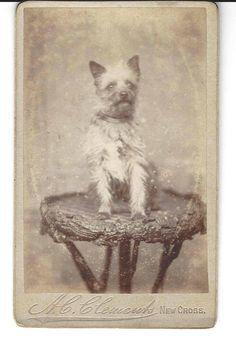 Rare Antique Dog CDV Carte De Viste 1860's Cabinet Card