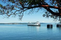 """""""Anacortes, Washington"""" ~ """"Anacortes is a popular destination for those wishing to ferry over to the San Jaun Islands. The Madronna tree with it's papery bark is a frequent sight along Washington's coastal areas."""" ~ by Marjorie Wallace"""