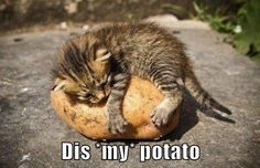 Dis *my* potato