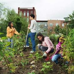 Gardening is very sustainable and a good social building activity