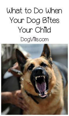 How to Socialize an Aggressive Dog (in 7 Steps) is part of Military working dogs - Looking for tips on how to socialize an aggressive dog Read on for 7 steps that will help Fido move past his aggression issues Military Working Dogs, Military Dogs, Police Dogs, Police Humor, Cops Humor, War Dogs, Dog Attack, German Shepherd Dogs, German Shepherds