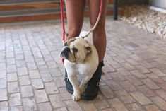 Dog, boots