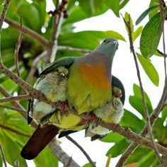 Ma bird with baby birds under her wings.