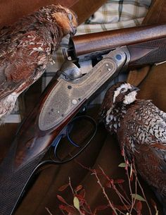 Now that the spring turkey-hunting season is nearly upon us, you should find the right shotgun. As turkey hunting has become increasingly popular, more and more manufacturers have developed shotguns that have more features. Grouse Hunting, Quail Hunting, Pheasant Hunting, Bow Hunting, Side By Side Shotgun, Turkey Hunting Season, Double Barrel, Shooting Guns, Hunting Equipment