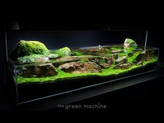 Aquascape Tutorial Guide: 'Continuity' by James Findley & The Green Machine - YouTube