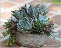 Learn How to Design this 'floral-style' succulent container arrangement at a hands on workshop Saturday, June 14, 2014 via www.thesucculentperch.com