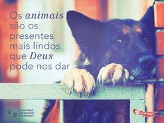 """""""Os animais são os presentes mais lindos que Deus pode nos dar.""""  14 de Março é #DiaDosAnimais #Deus"""