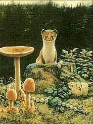 Pilze: Pilze und Marder Bird, Animals, Mushroom Hunting, Switzerland, Animales, Animaux, Birds, Animal, Animais