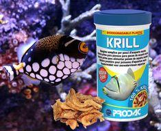 Aquarium Fish Food, Marine Aquarium, Juice Bottles, Fish Recipes, Aquarium Fish, Aquariums, Fish
