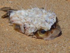 Strange fish I found washed up!