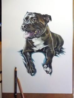 Staffordshire Bull Terrier drawing pet by JimGriffithsArt on Etsy